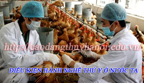 hanh-nghe-thu-y