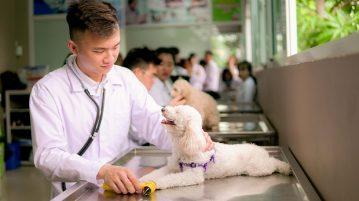 Liên thông đại học thú y tại sao không?